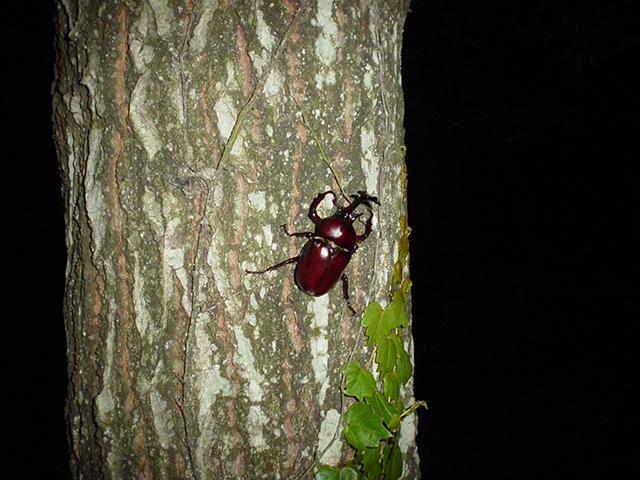 イベント_昆虫体験2
