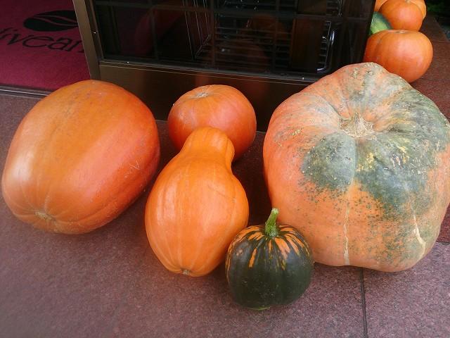 Happy Halloween! 地元の老人会の皆さんで作られたどてかぼちゃ! 色んな形があります