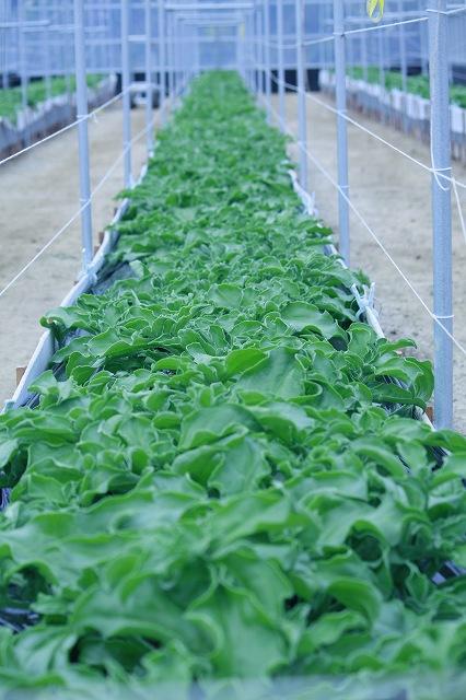 シャキ、プチッ!シャキ、トロ!小豆島の「ひしお」で生まれた野菜たち