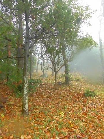 オリビアンの森|リゾートホテルオリビアン小豆島