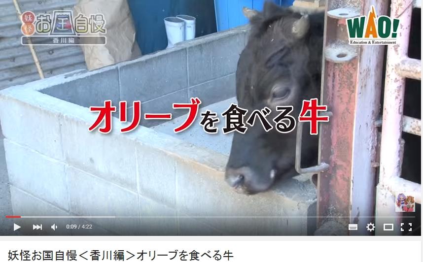 オリーブを食べる牛|オリーブ牛|リゾートホテルオリビアン小豆島
