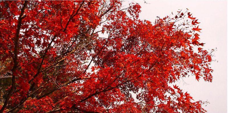 小豆島寒霞渓紅葉
